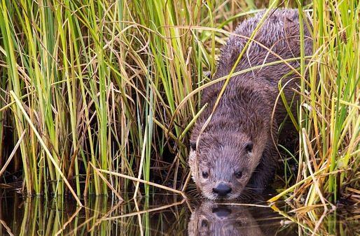 river-otter-1022858_960_720