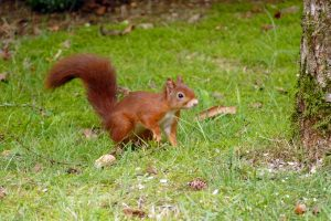 squirrel-4401371_1920